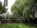 Un plan biodiversité adopté par la Ville de Paris