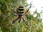 Les araignées, des auxiliaires précieux à préserver cet hiver
