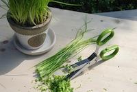 Ciseaux à herbes aromatiques