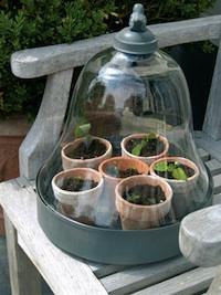 Cloche verre et plateau métal pour semis