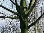 A Mondes Ouverts, portraits d'arbres