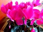 Vos fleurs après les fêtes