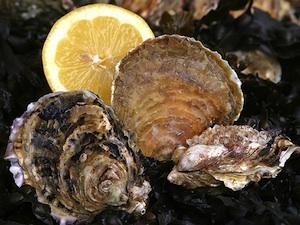 Huîtres plates du golfe du Morbihan