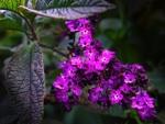 Jardin de senteurs : arbustes et fleurs