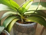 Orchidées : remise en forme !