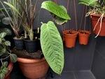 Plantes d'intérieur : conseils spécifiques