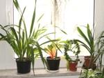 xxxLes plantes d'intérieur en vacances...