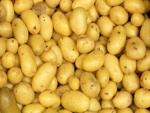 Pomme de terre : quelle variété !
