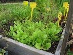 La santé des plantes au naturel