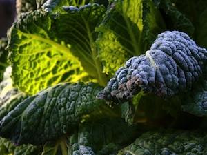 Protéger les récoltes du potager