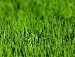 Créer une pelouse : préparation du sol