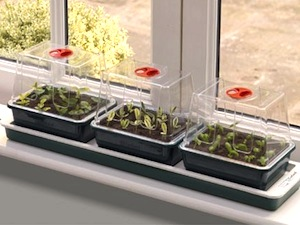 Mini-serres et tapis chauffants : semer et bouturer au chaud