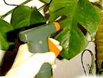 Plantes d'appartement en hiver