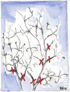 Simple nettoyage pour les clématites à floraison printanière
