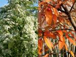 Des arbres et arbustes qui poussent vite