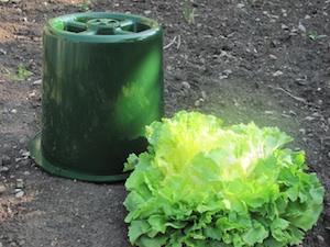 Cloche à blanchir Pouss'Vert