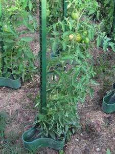 Eco-tuteur à tomate Pouss'Vert