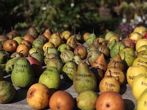 Variétés anciennes de pommes et poires