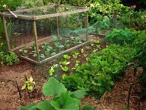 Idées bio et écologiques pour le jardin