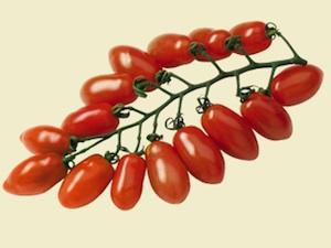 Tomate Trilly F1 - La Sélection du Chef®