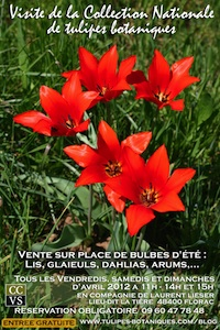 Visite de la Collection Nationale de Tulipes Botaniques