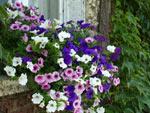 Cascade fleurie pour été coloré