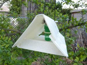 Piège à phéromones suspendu dans un arbre fruitier