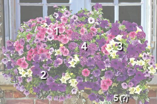 Cascade fleurie pour t color avec des surfinias - Idee composition jardiniere exterieure ...