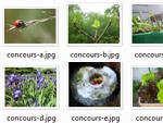 Concours photos 2012 : quelques images