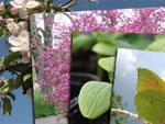 Concours photos : quelques images...