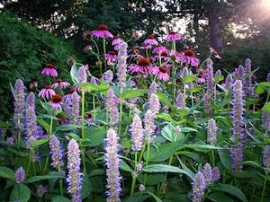 Fleurs vivace tout - Fleurs vivaces longue floraison ...