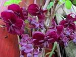 Les plantes grimpantes - fiches pratiques