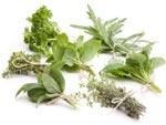 Récolter et conserver les aromatiques