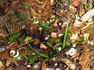 Compost de jardin : le bon mélange de déchets
