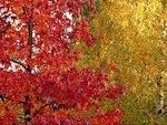 Pourquoi les feuilles se colorent en automne
