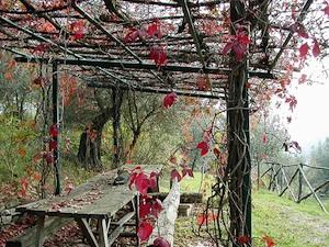 Pergola en automne - Vigne vierge