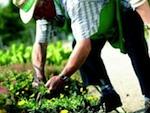 Des ateliers pour apprendre à bien jardiner