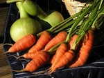La vente directe de fruits et légumes