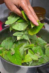 Blanchiement des feuilles d'amarante dans l'eau bouillante