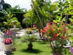Fleurir son jardin de vacances