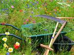 L'entretien d'une prairie fleurie