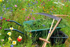 Faux et brouette dans la prairie fleurie