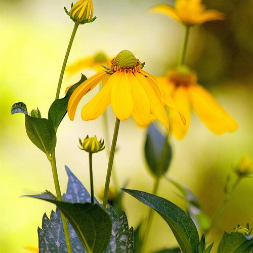 Les Plus Belles Fleurs Jaunes En Ete