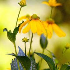 Les plus belles fleurs jaunes en été