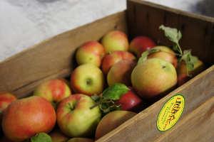 Pommes de bonne conservation