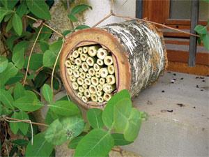 Abris pour insectes auxiliaires : vraiment utiles ?