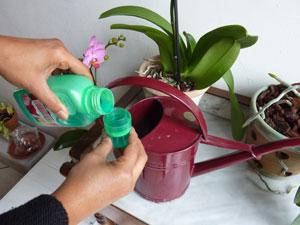 Apport d'engrais à une orchidée