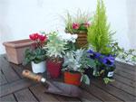 Potées et jardinières fleuries pour l'hiver