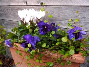 Potees Et Jardinieres Fleuries Pour L Hiver