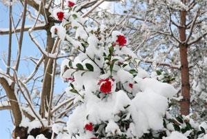 Plantes fleuries pour fêtes de fin d'année
